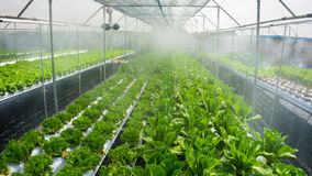Agriculture hydroponique des feuilles de salade Photo libre de droits