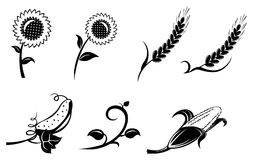 Agriculture icons. Wheat, corn, sunflower and cucumber illustration Royalty Free Stock Images