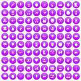 100 agriculture icons set purple. 100 agriculture icons set in purple circle isolated on white vector illustration Royalty Free Stock Photography