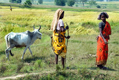 Agriculture in India Stock Image