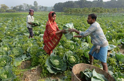 Agriculture indienne Image stock
