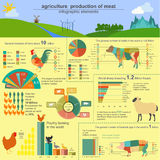 Agriculture, infographics de production animale, illustrations de vecteur Image libre de droits