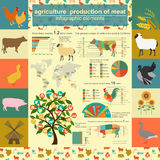 Agriculture, infographics de production animale, illustrations de vecteur Images stock