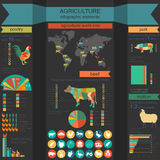 Agriculture, infographics de production animale, illustrations de vecteur Photographie stock libre de droits
