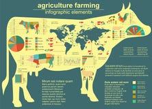 Agriculture, infographics de production animale, illustrations de vecteur