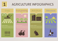 Agriculture infographics Stock Photography