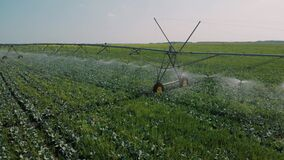 Agriculture irrigation of farm field. automatic artificial irrigation of the field for good harvest. smart agriculture