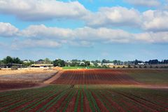 Agriculture in Israel. Typical agricultural landscape of the central Israel Stock Photos