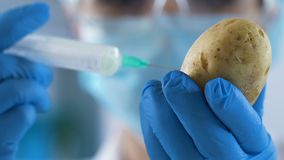 Agriculture lab worker making injection to potato before planting, fertilization. Stock footage stock footage