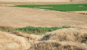 Agriculture land with cereal harvested fields and green grass Stock Image