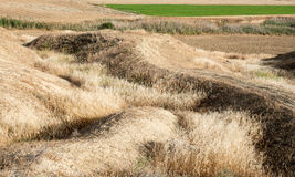 Agriculture land fields background and green grass. Agriculture land background harvested fields and green grass Royalty Free Stock Image