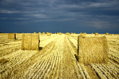 Agriculture land with straw rolls. And dramatic sky Royalty Free Stock Photography