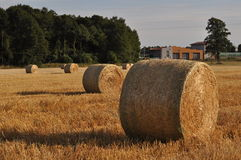 Agriculture land with straw rolls Stock Images