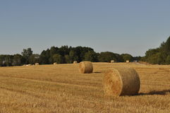 Agriculture land with straw rolls Stock Photos