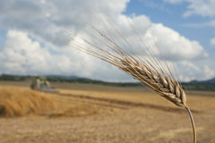 Agriculture landscape Royalty Free Stock Images