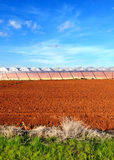 Agriculture landscape Stock Photography