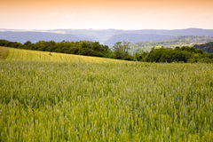Agriculture Landscape. With wheat field,evening, by Beckingen,  Saarland / Germany Stock Photo