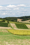 Agriculture Landscape Stock Images