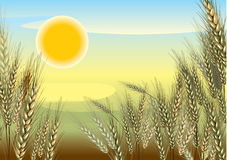 Agriculture.Landscape Photo stock