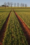 Agriculture landscape Stock Image