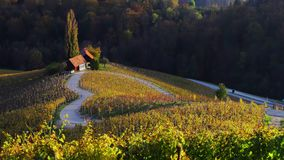 Agriculture landscape with autumn vineyards and fields in the heart of Tuscany, Italy.  stock footage