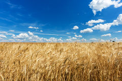 Agriculture Landscape Stock Images