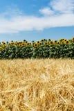 Agriculture Landscape Stock Photos
