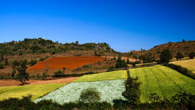 Agriculture landscape with fields in Shan Myanmar. Agriculture landscape with fields in Shan, Myanmar Stock Images