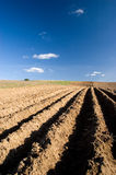 Agriculture landscape - ploughed field. Newly ploughed field with blue sky Royalty Free Stock Image