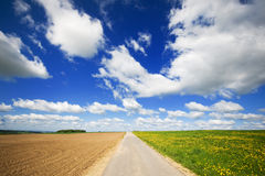 Agriculture landscape with road in the middle. Grass fields with Dandelions and cloudy sky Stock Images