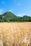 Agriculture landscape in South of France Stock Photography