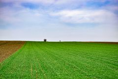 Agricultural landscape.Wheat field. Tractor and farmer in the distance royalty free stock photography