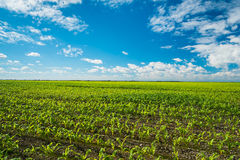 Agriculture Royalty Free Stock Images