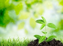 Agriculture. Life Dirt Business Currency superannuation Environment stock image