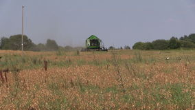 Agriculture machinery harvest ripe dry peas plants. Stork birds stock video footage