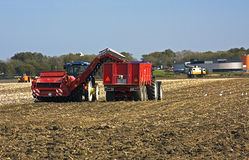 Agriculture machines. Are harvesting potatoes Stock Image