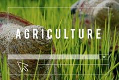 Agriculture moissonnant la ferme cultivant le concept de croissance images stock