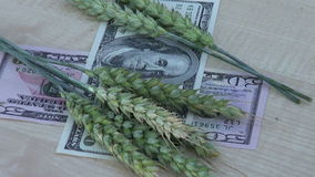 Agriculture money business concept – rotate  ears and dollars stock video