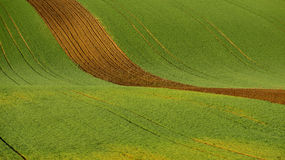 Agriculture on Moravia rolling hills with wheat filds and tractor Stock Photos