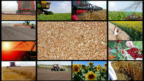 Agriculture multi screen Stock Image