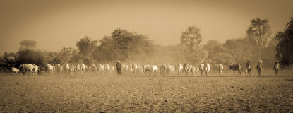 Agriculture of Myanmar Stock Photography