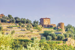 Agriculture near montalcino Stock Photography