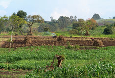 Agriculture near Rwenzori Mountains Stock Photos
