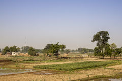 Agriculture near Son Nagar. Bihar. India Royalty Free Stock Images