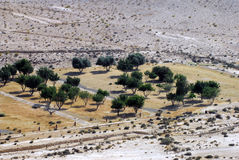 Agriculture in the Negev Desert Royalty Free Stock Images