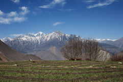 Agriculture - Nepal. Small patch of arable land in high altitude Stock Photography