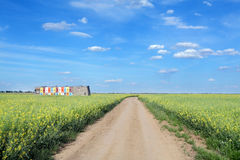 Agriculture, oil rape Royalty Free Stock Photos