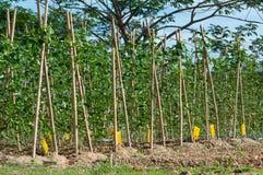 Agriculture organique Photographie stock libre de droits