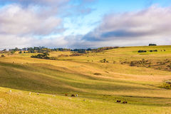 Agriculture outback landscape with farm animals grazing on paddo Royalty Free Stock Photo