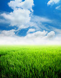 Agriculture paddy field with blue sky Stock Image